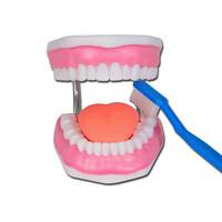 Πρόπλασμα Οδοντοστοιχίας Ενήλικα